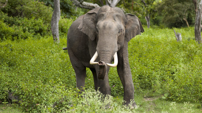 Man killed due to elephant attack