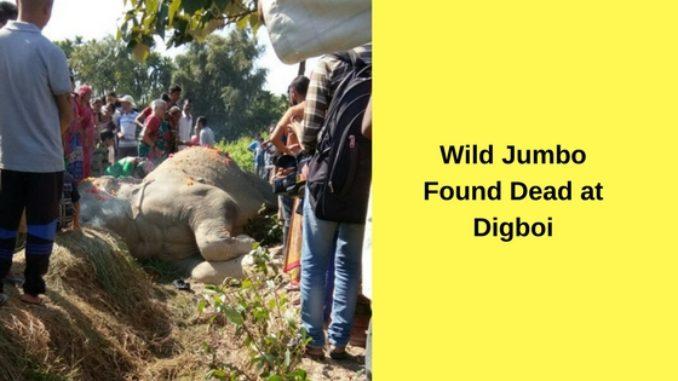 Wild Jumbo Found Dead at Digboi
