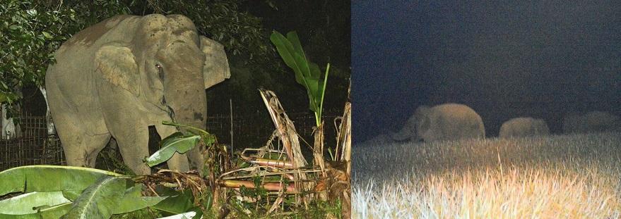File photo: Wild elephants creating havoc in Upper Assam