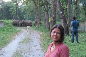 Assam Elephants in Peril 3