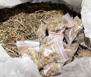 Tripura - the new smuggling hub of ganja 2