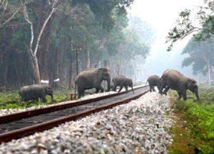 Secure the elephant corridors 3