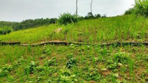 Pilot project in Manipur to develop alternative to shifting cultivation in North East 1