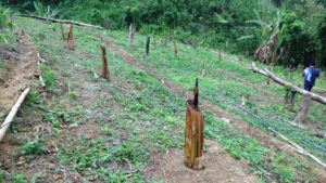 Pilot project in Manipur to develop alternative to shifting cultivation in North East 5