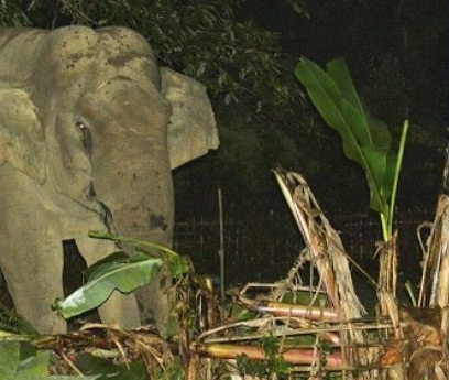 WhatsApp and SMS alerts to stop elephant menace  1