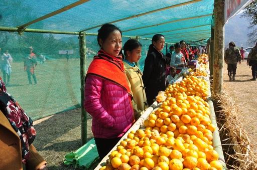 Kachai Lemon Festival begins in Manipur's Ukhrul district 1