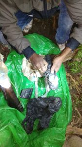 Breaking News: Dreaded poacher that allegedly killed a rhino on February 11 nabbed 1