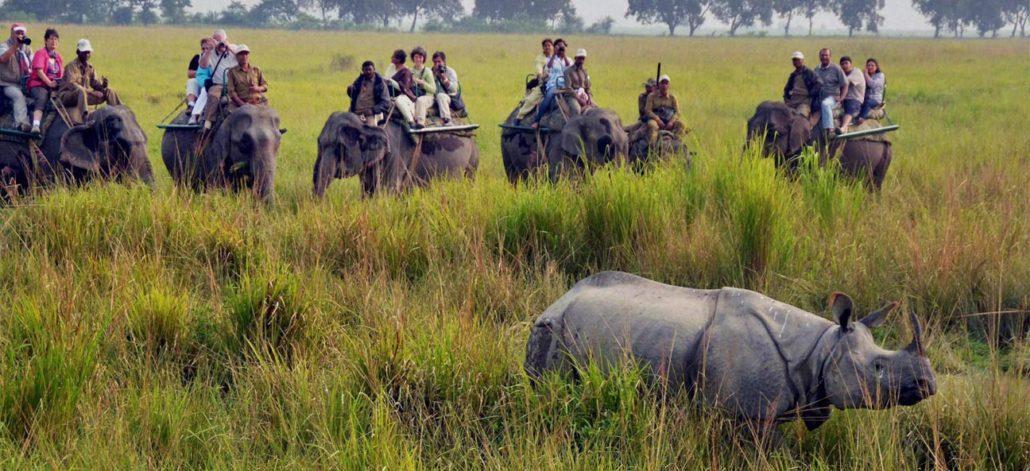 Tourists at Kaziranga National Park. File photo