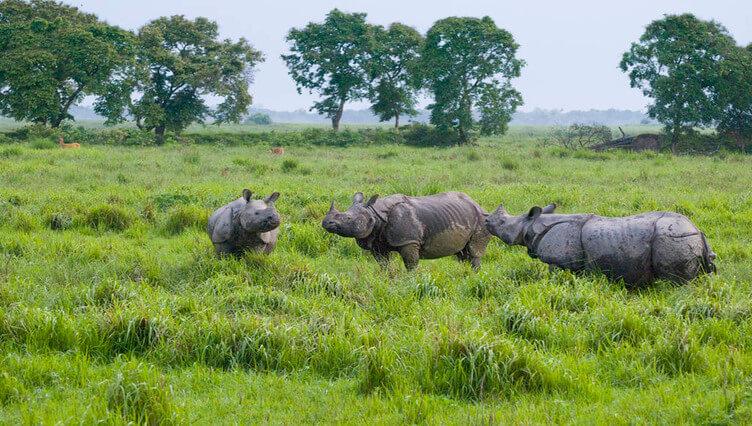 Pabitara wildlife sanctuary
