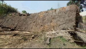 Wild elephant damage (2)