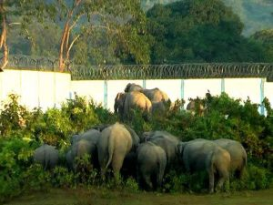 NRL boundary wall on elephant corridor demolished 1