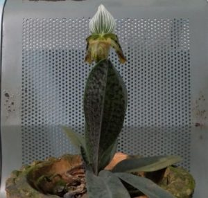 KMSS' Orchid Park at Kaziranga raided, three rare orchid species seized 3
