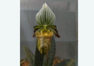 KMSS' Orchid Park at Kaziranga raided, three rare orchid species seized 1