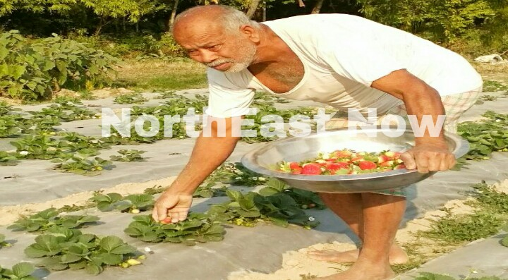 gauri deka bajali farmer
