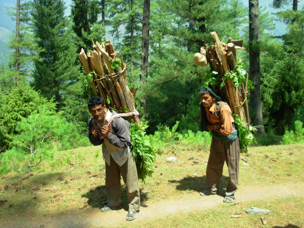 Draft Forest Policy