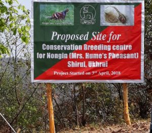 Manipur initiative to conserve state bird Mrs Hume's Pheasant 1