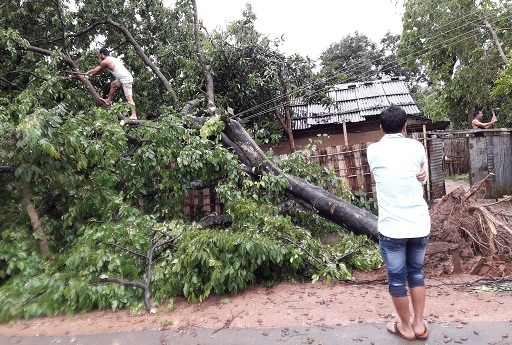 An uprooted tree at Langhin in Karbi Anglong. Northeast Now