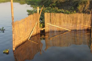 Assam: A wetland too popular for its own good 4