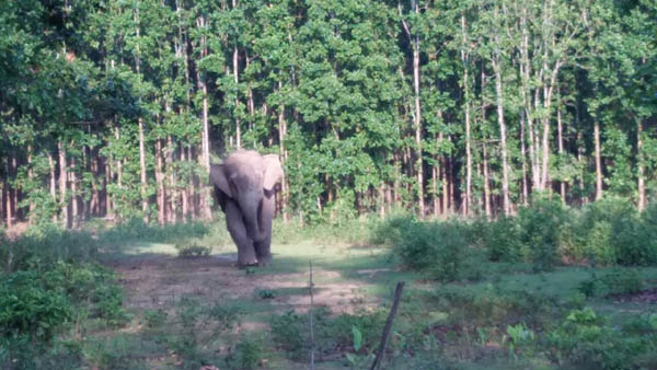 man-elephant conflict in Goalpara