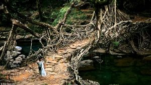 root bridge 1