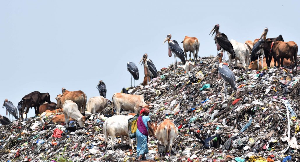 Indian Greater Adjutant Storks sit on garbage where waste picker lady search for usable items from a garbage dumping site on the eve of World Environment Day near Deeporbil Wildlife Sanctuary in Guwahati Photo: UB Photos Representative image