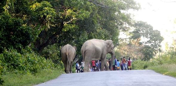 Wild elephants wreak havoc in udalguri