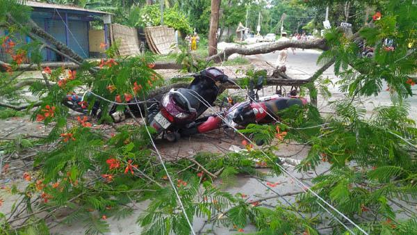 tree fell in tezpur