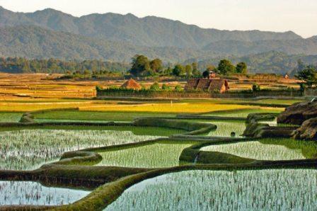 Apatani Cultural Landscape