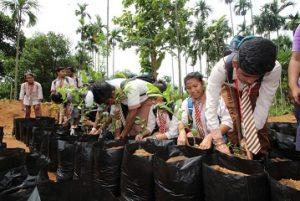 Plantation Festival