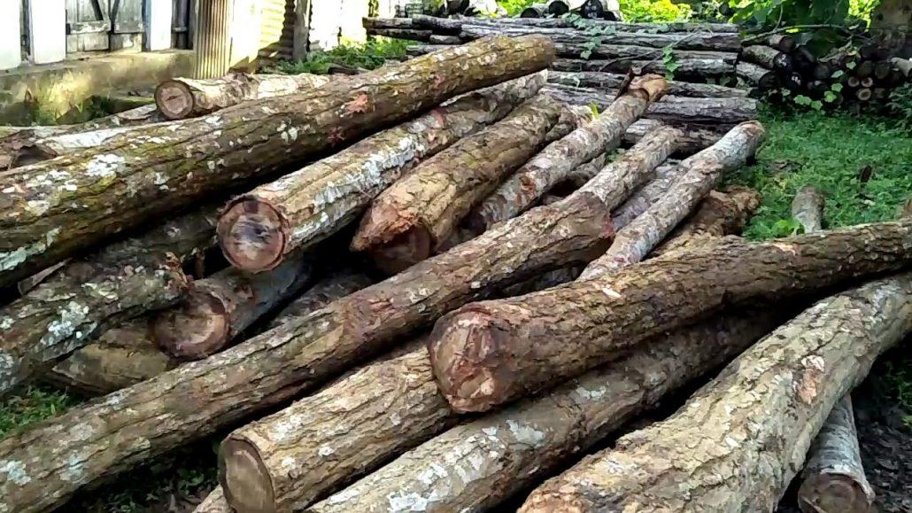 Rongjuli timber