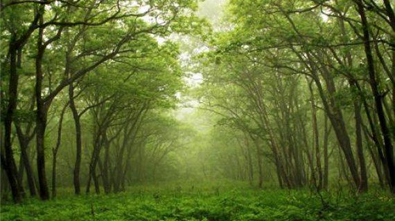 arunachal forest