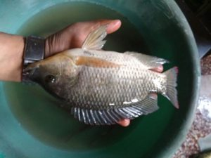 Manipur: This MBA chooses fish farming over corporate jobs and wins award 4