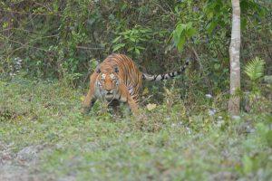 Kaziranga Tiger Reserve