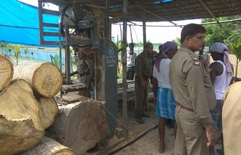 Illegal sawmill