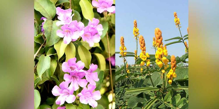 sikkim and arunachal orchids to feature in new app
