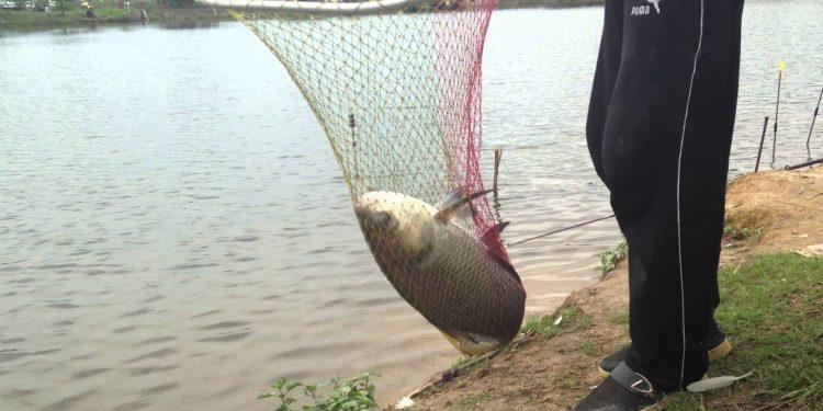 doyang fishing new