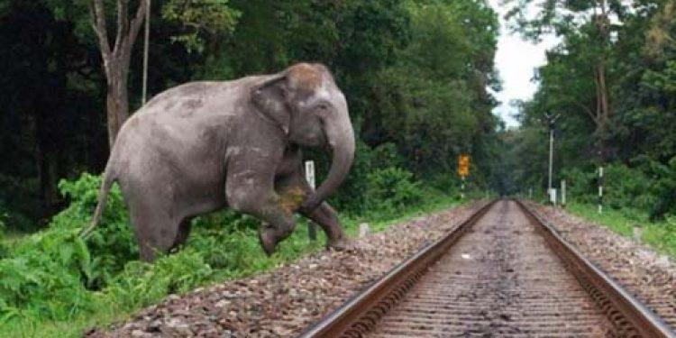 Elephant on railway track