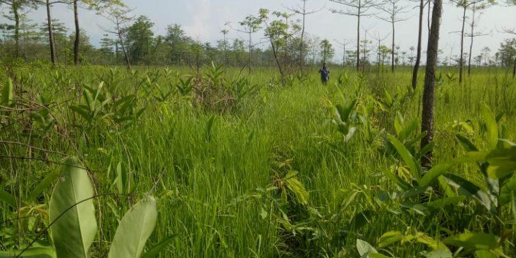 Grass land-