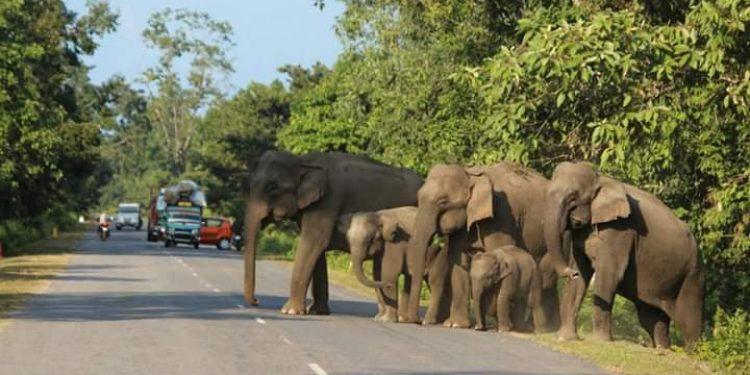 nameri elephant