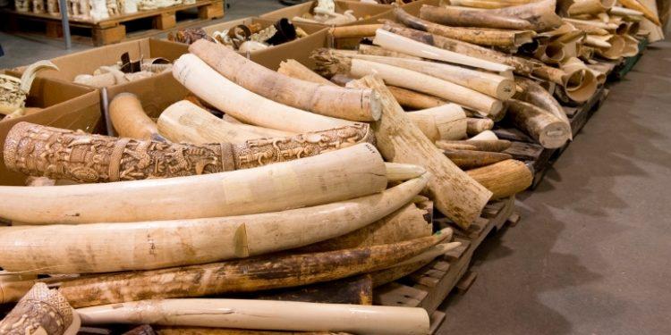 rhino horn and tiger bone