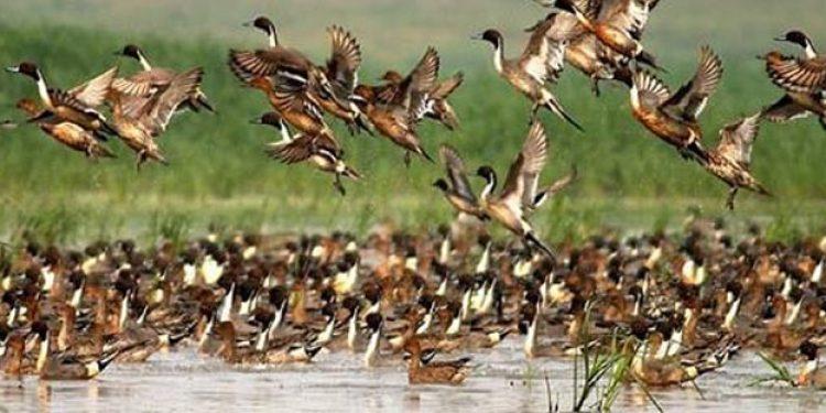 Birds in Kaziranga