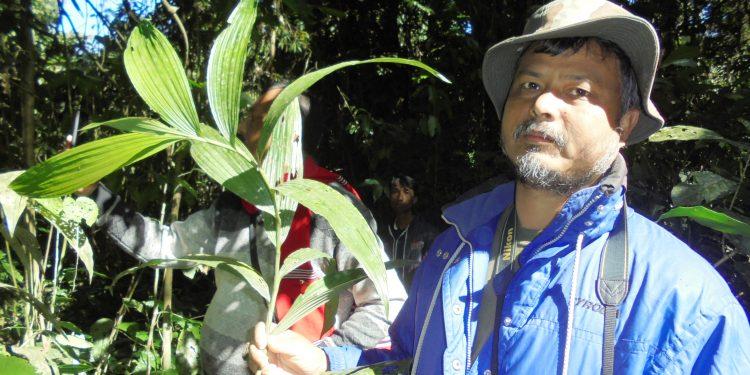 Corimbolcis Viridifolia-a ground orchid found in Poba Reserve Forest