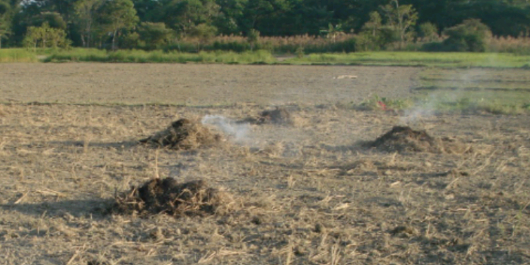The practice of straw burning in vogue.  Photo credit: Northeast Now.