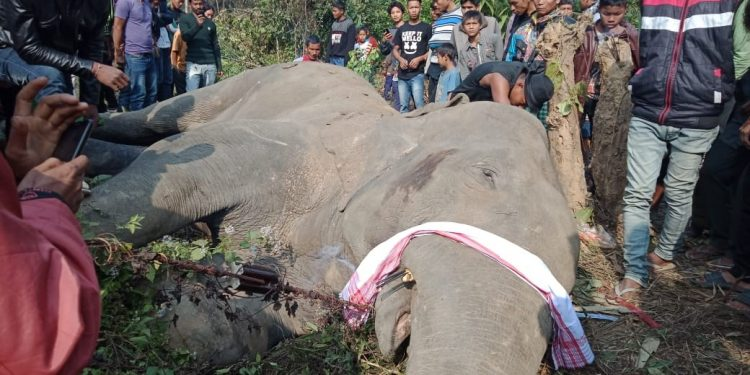The electrocuted elephant in Goalpara district on Wednesday. Photo: Northeast Now.