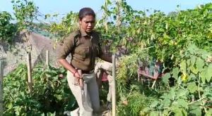 Marijuana plants being destroyed at Kalyanpur under Khowai district. Image - Northeast Now