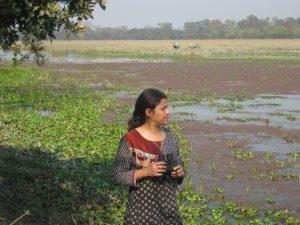 Wetland at Pobitora
