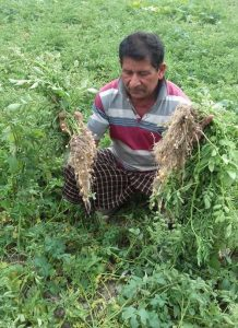Assam: Mysterious disease affects potato farming in Dhakuwakhona 3
