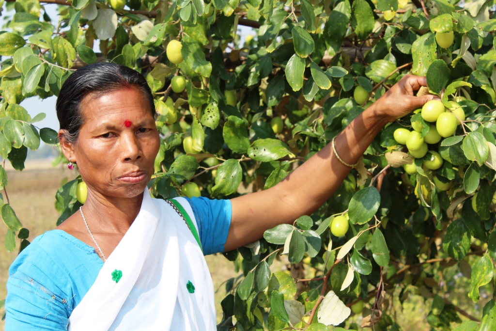 Woman entrepreneur turns barren river bank to an orchard of profit 3