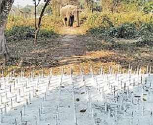 Guwahati Army base causing 'elephant'ine problem to tuskers 1