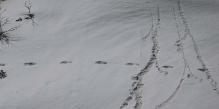Mysterious footprints found my mountaineering expedition team of the Indian Army Image Credit: Twitter
